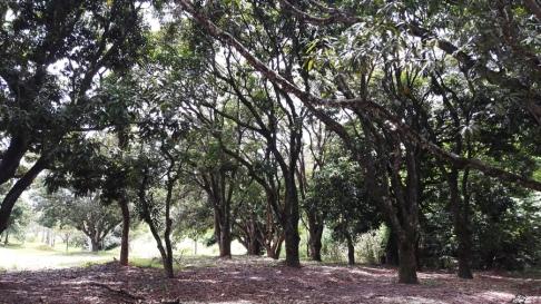 Parque Aguas Claras 1