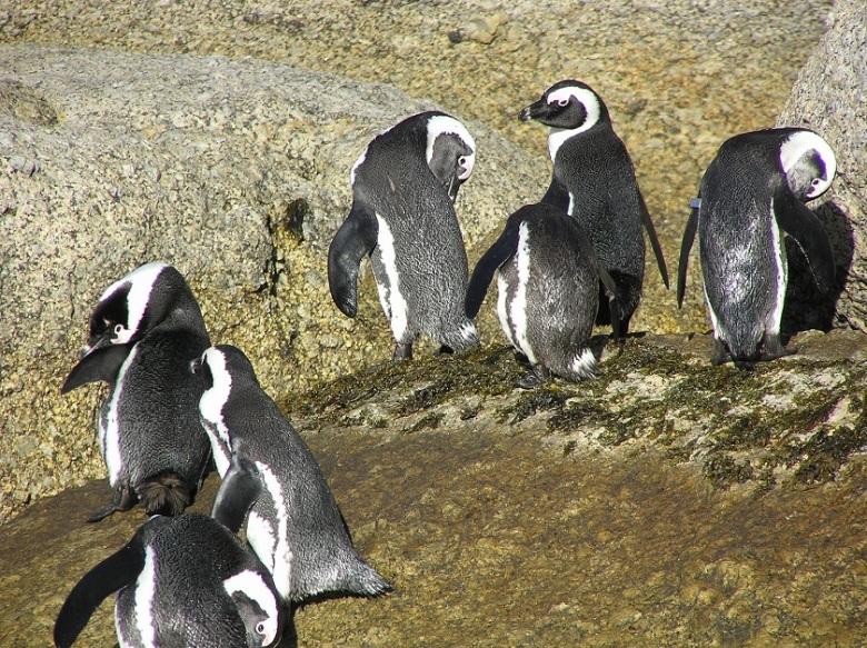 Boulders Penguin Park